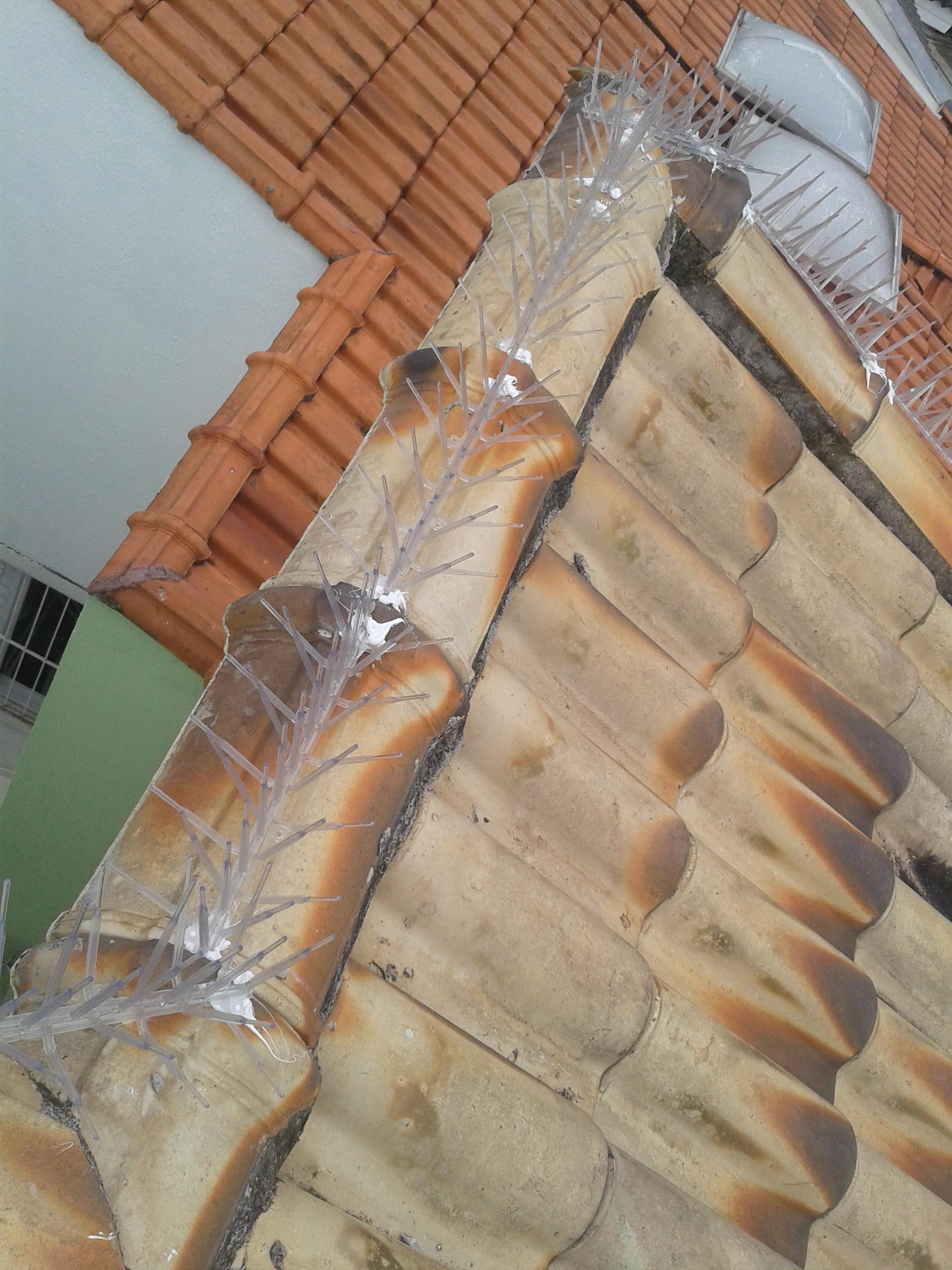 Artesanato Loja Curitiba ~ Colocaç u00e3o de espicula anti pombo em telhado Parada inglesa zona norte de s u00e3o paulo Roberto